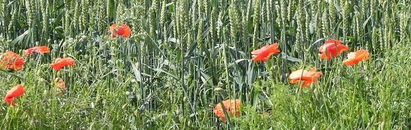 L 39 organisme certificateur chambre d 39 agriculture du gers - Chambre d agriculture du gers ...